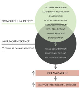 Biomolecular Deficit and Immunosenescence